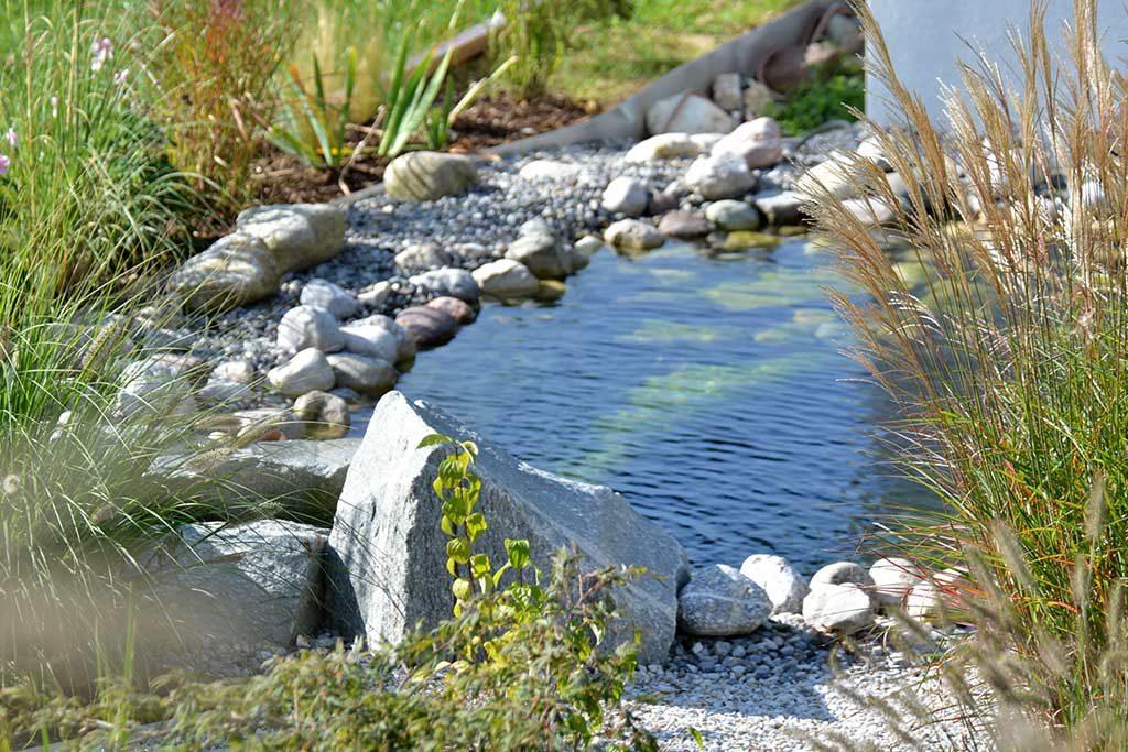 Uferdetails am runden Teich