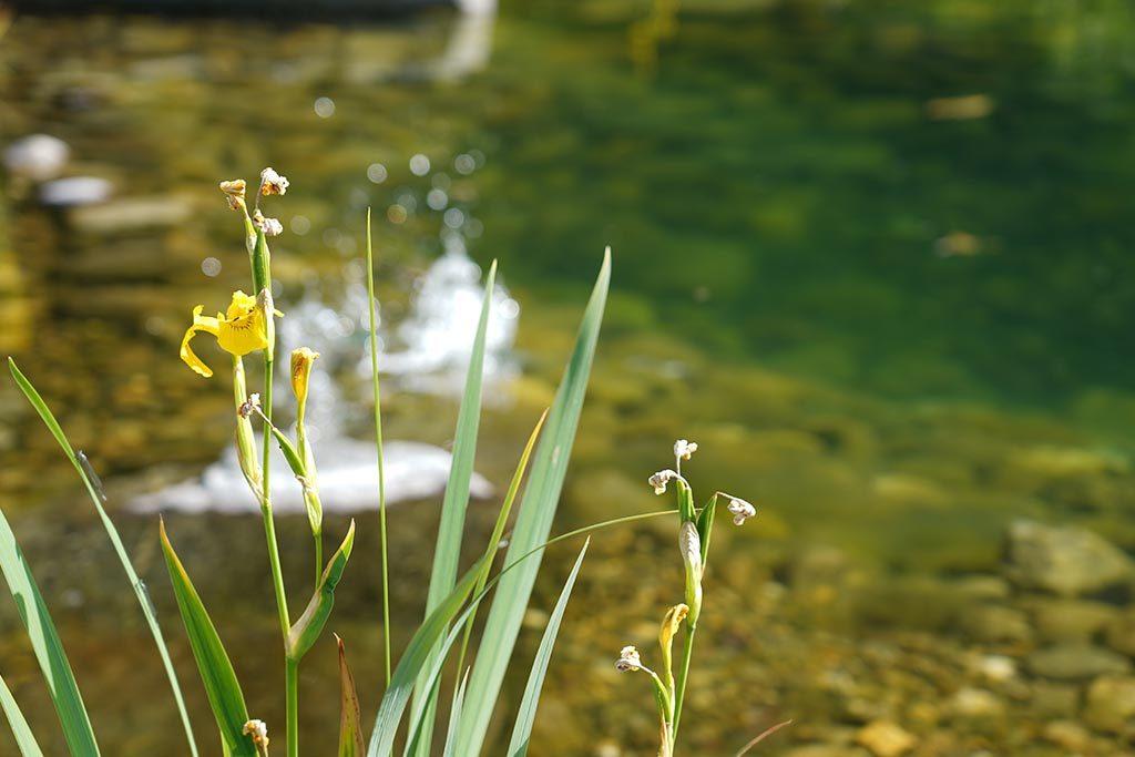 Blumendetails am Wasserspiel